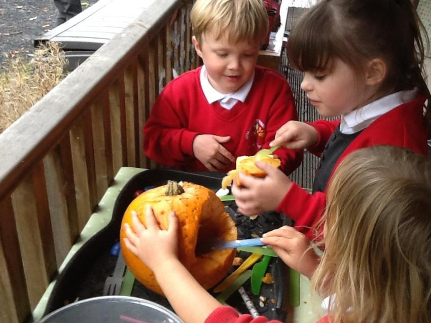 exploring and tasting pumpkin seeds