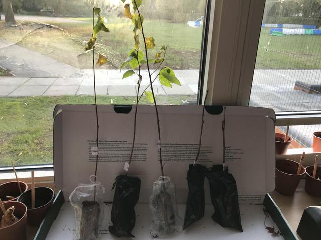 The 5 saplings
