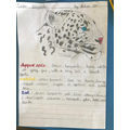Aidan's beautiful snow leopard