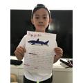 Aidan's Dogfish information