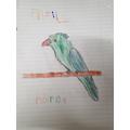 Fazils parrot.jpg