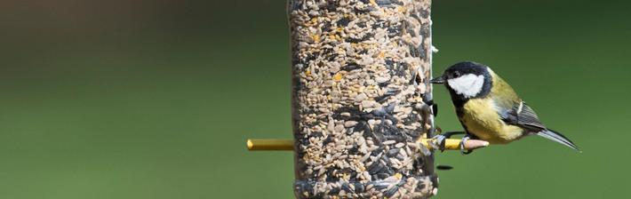 recycled bottle bird feeder