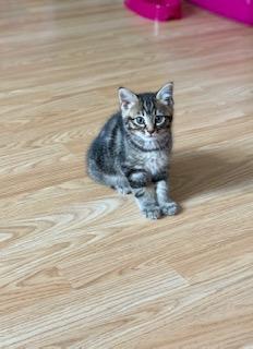 Has Max got a new kitten?