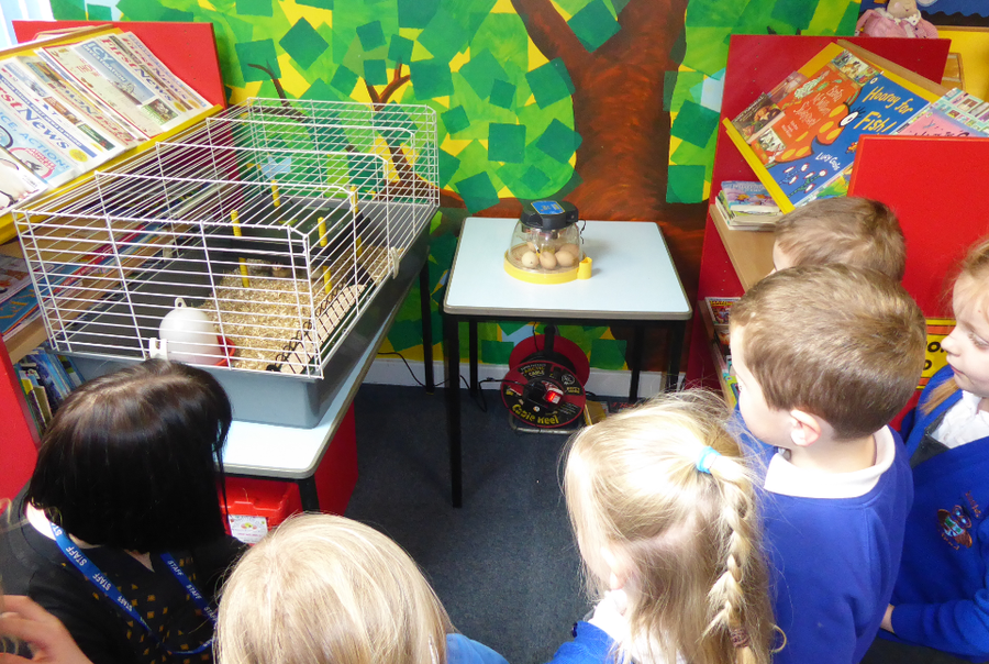 Spring Chicks at Audley