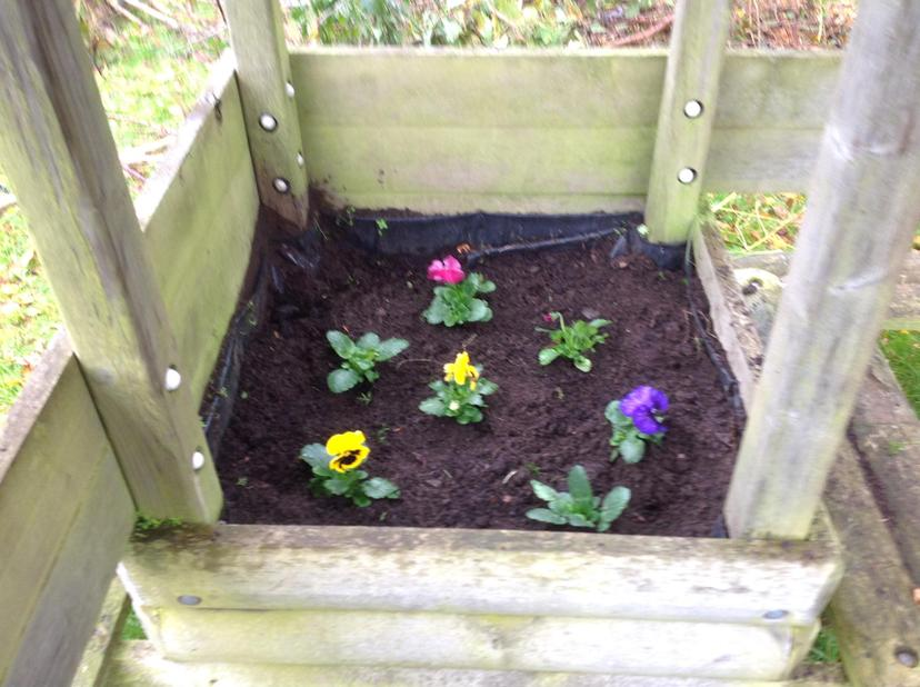 Huge thanks to Hartley's for donating the pansies