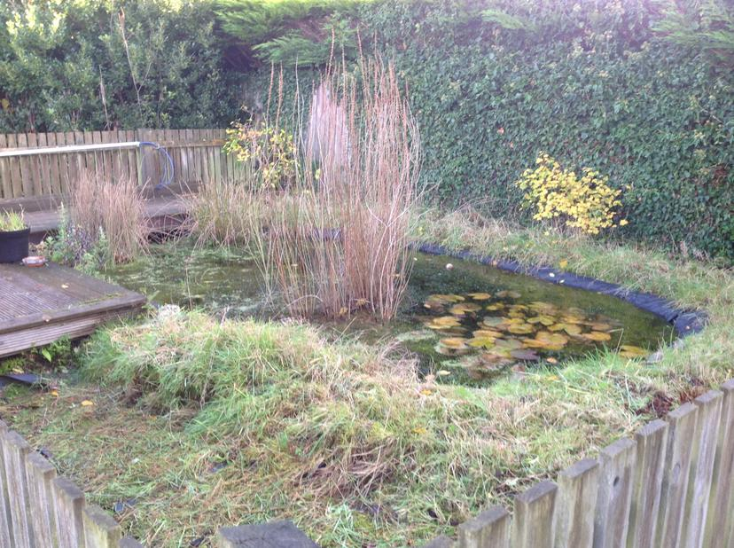 A pond you can walk around