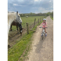 Saying hi to the horses on a bike ride!