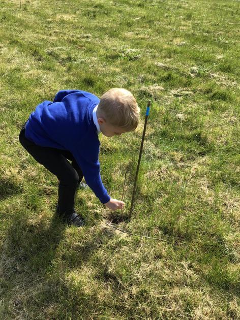 Tree Planting - May 2021