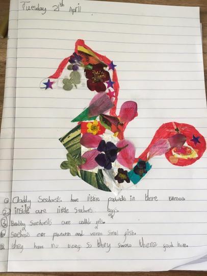 A wonderful seahorse Vela!