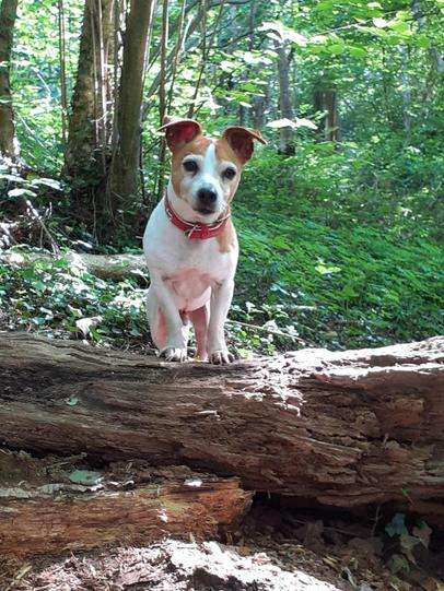 Eddie the dog by George!