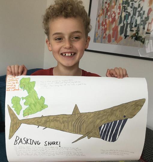 Dylan's basking shark