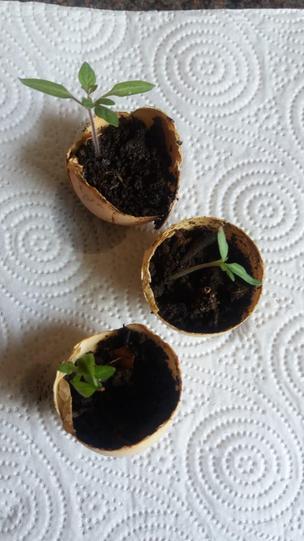 Seedlings...
