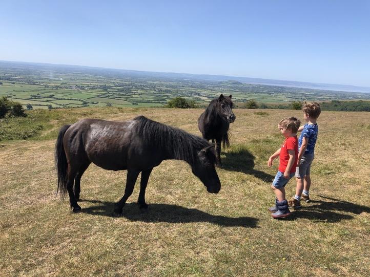 Ben & Oli meeting some horses on the Mendips