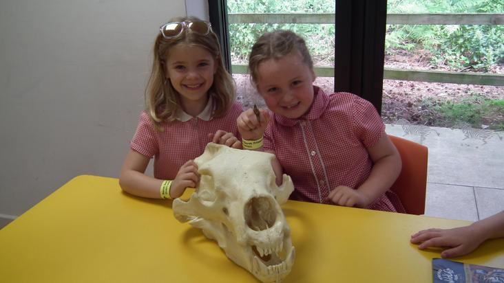 Year 2 Yorkshire Wildlife Park Visit