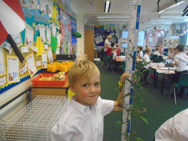 Year 2 Measuring Plants
