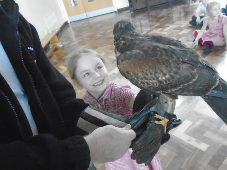 Year 1 Owls Workshop