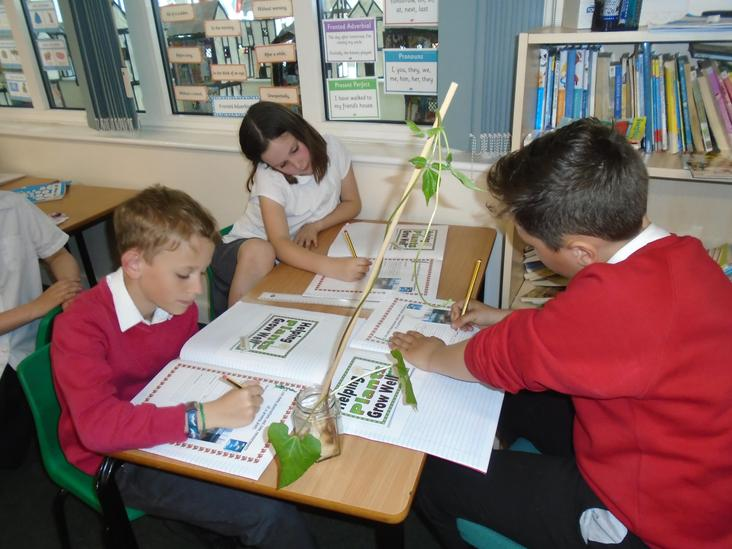 Year 4 Transpiration Science Experiment