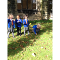 We found conkers in the grass.