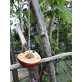 An apple bird feeder with only a couple of seeds left.