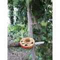 An apple bird feeder with seeds pushed into the apple.