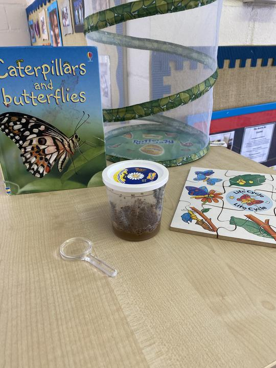 21.06.21-We were all very excited when our caterpillars arrived last week!