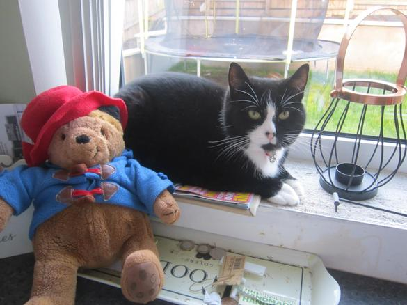 Paddington met lots of friendly cats!