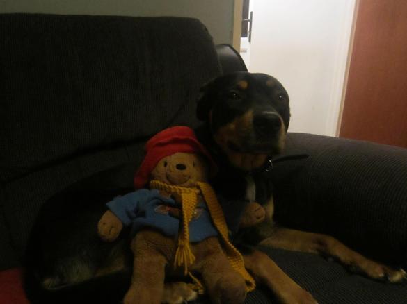 He met Marley's dog, Lexi.
