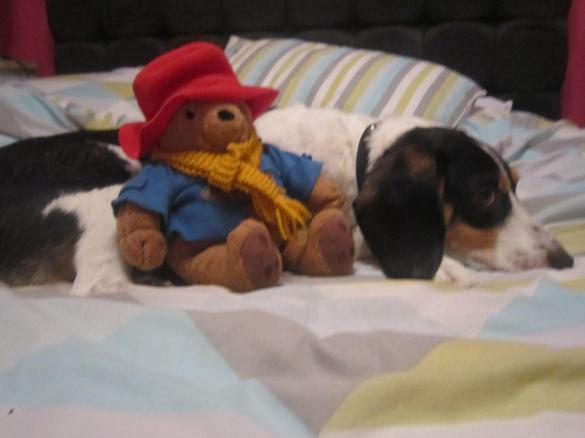 He met Nicole's dog Murphy.