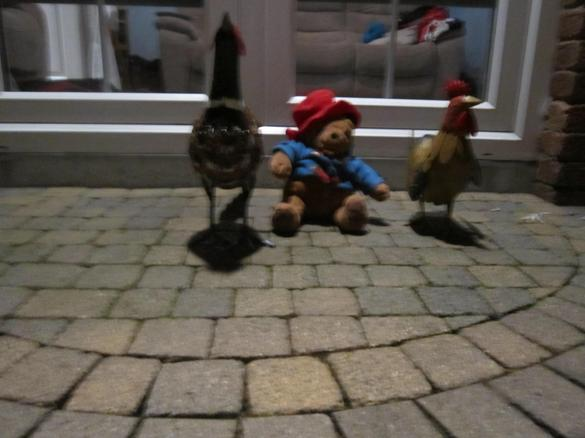 Paddington met some funny birds!