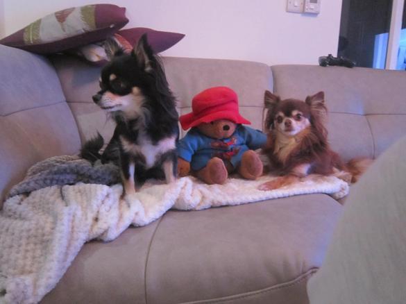 He met Gizmo & Pippa.