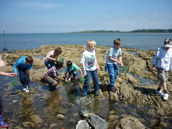 Look in Year 4 class pages for photos of rockpools
