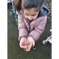 Catching worms-Emaan