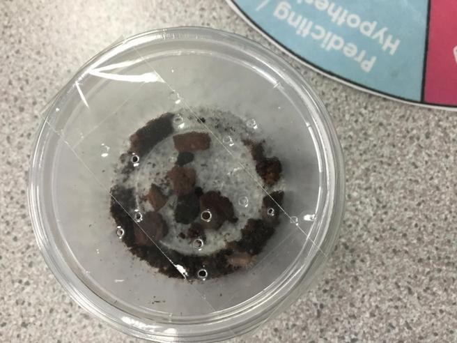 Is it a crustacean, annelid or mollusc?