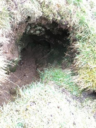 a badger sett