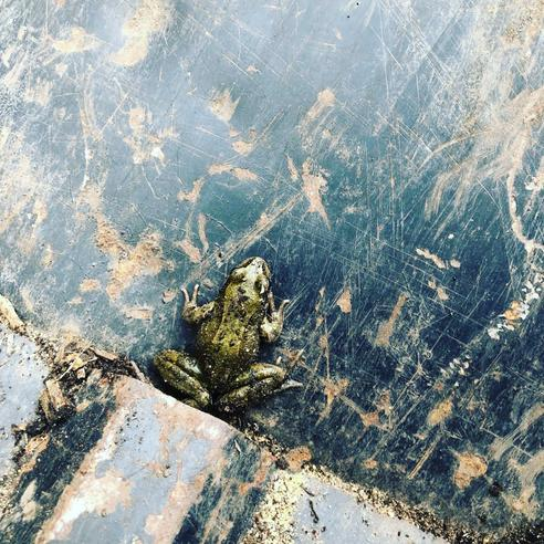 A frog made a home in our truck!
