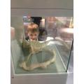 Investigating animal skeletons