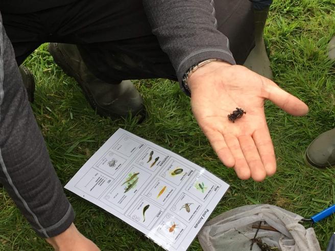Caddisfly larvae.