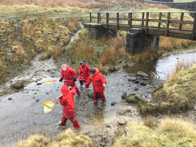 collecting creatures from the brook with nets