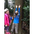 This tree is very tall!