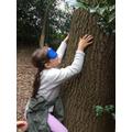 Feeling the tree to identify it