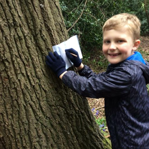 Making bark rubbings of our favourite trees