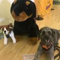Winston graduating Dog School