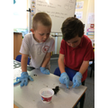 We loved dissecting owl pellets!