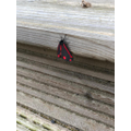 Rose spotted this moth! Do you know what it is?