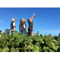 Finding the weight of six sugarbeet per field