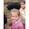 Betsy the Berkshire Pig