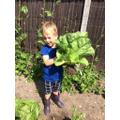 Homegrown lettuce!