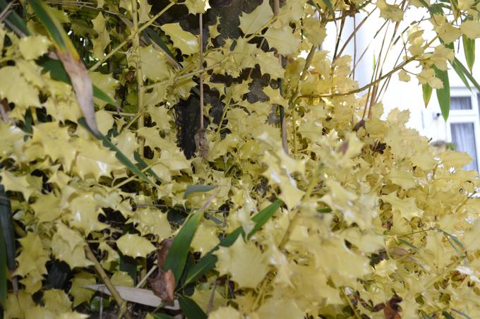 Beautiful Autumnal plants