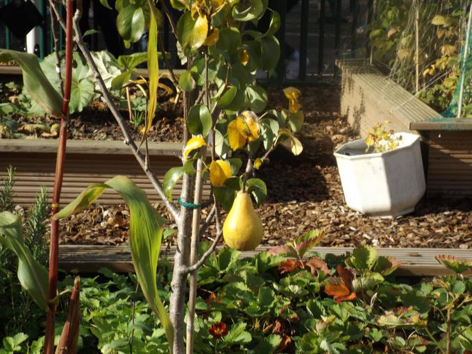 We grow a range of fruit and vegetables