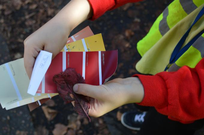 Matching the colour of Autumn leaves to colour charts